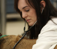 Student listening to a dog's heart beat