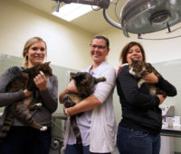 Dr. Lynn Weber (centre) with graduate student Jennifer Briens (left) and research associate Kyla Zatti hold three of the cats that will participate in the WCVM nutrition study. Photo: Kris Foster.