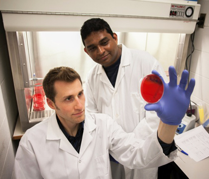 Drs. Joseph Rubin and Madalagama Appuhamilage Roshan Priyantha examine bacterium commonly found in dogs.