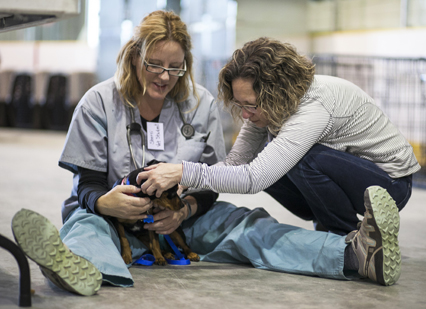 Veterinary student Sherri Woods and WCVM surgeon Dr. Cindy Shmon examine a canine patient.