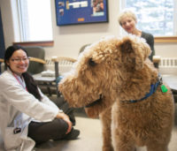 Joey visits with Dr. Vivian Fan (left) and his owner Linda Jensen. Photo: Christina Weese.