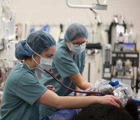 anesthesia team