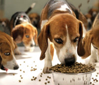 beagles and pet food