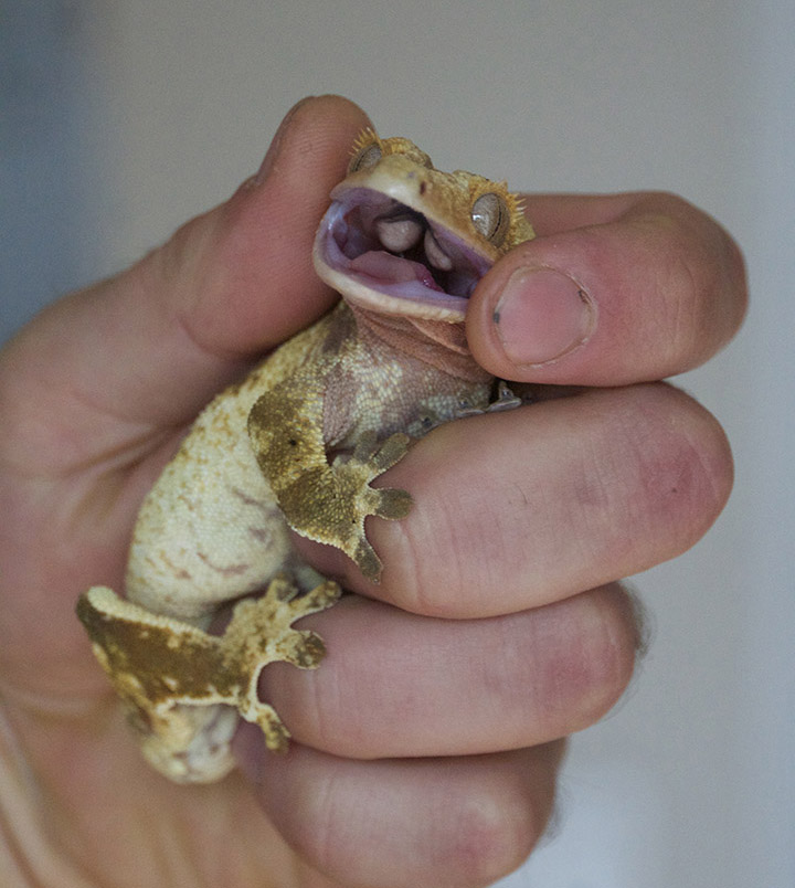 hand holding reptile
